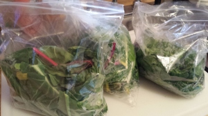Left to right:  Swiss chard and collard greens, baby swiss chard, spinach